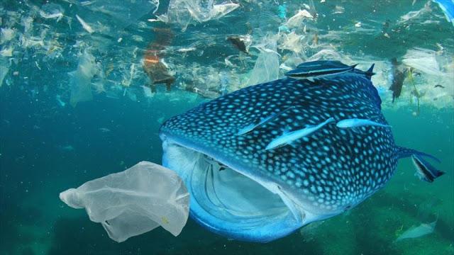 Estudio: El 72 % de criaturas consume plásticos en los océanos