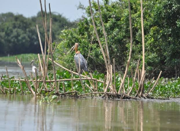 WETLAND CONSERVATION RULES; INDIATHINKERS