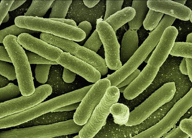 Quantas bactérias tem no intestino?