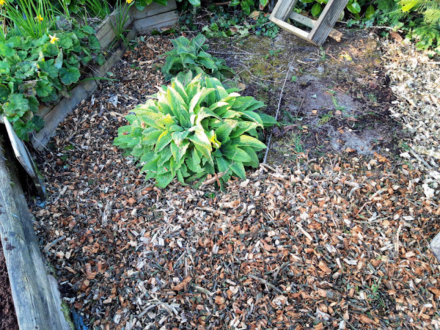 Image shows the same area but tidier.  There are more bark chippings and the weeds have been cleared