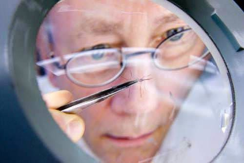 sivrisinek incelemesi