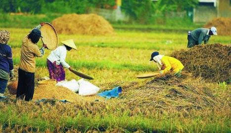 Pengertian Dan Konsep Petani Dan Pertanian Wong Penoh