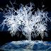 Snow Luminos
