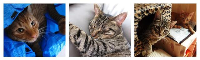 Cat calendar October to December