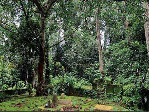 Why There Are Numerous Snake Groves Or Sarpa Kavu In Kerala?