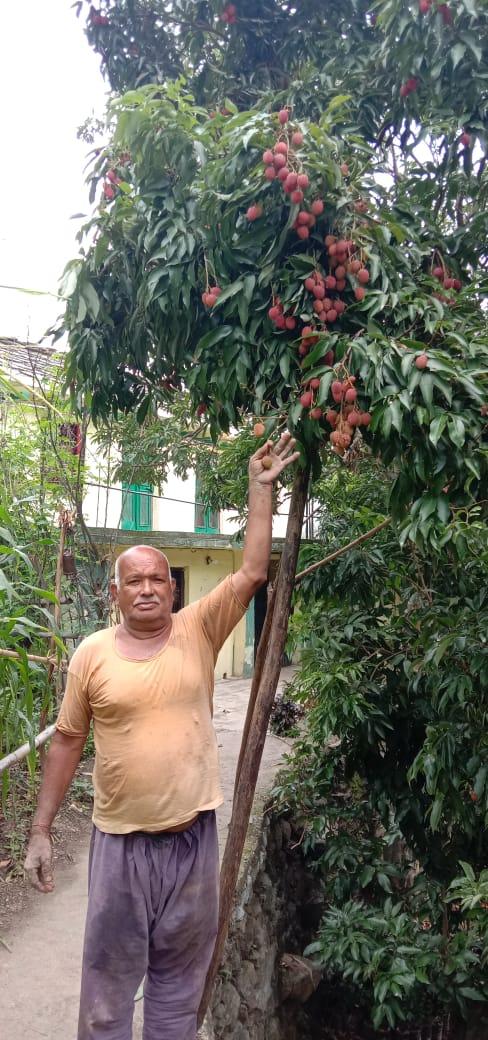 70वर्षीय रिटायर्ड शिक्षक आनंद सिंह नयाल ने जड़ी बूटी फल फूल उगाकर गांव को किया आबाद-आज जंगली जानवर कर रहें उसे बर्बाद-देखें पूरी खबर