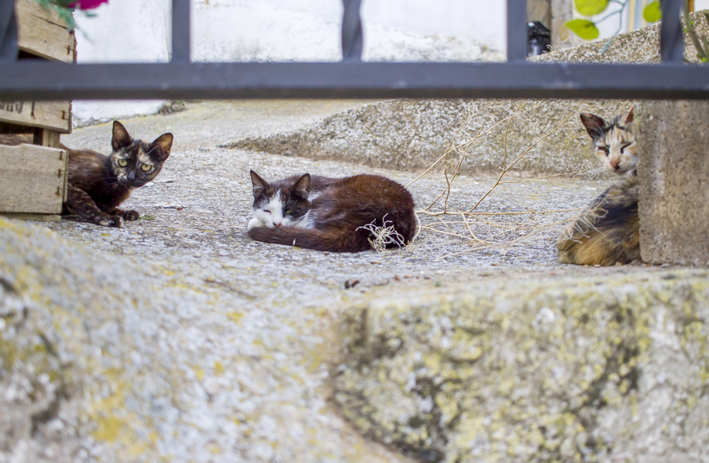 lejos ciudad zaragoza gatos moros