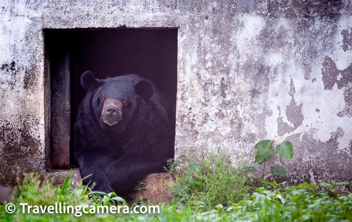 Last year, we had shared a detailed blogpost about Rewalsar Lake and main places to explore along with activities one can do around this region of Mandi, Himachal Pradesh. In this post,  we are attempting to share about the small zoo located around the Rewalsar Lake and we went through various emotions while exploring this zoo.