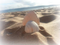 Shells in sand with sea in background