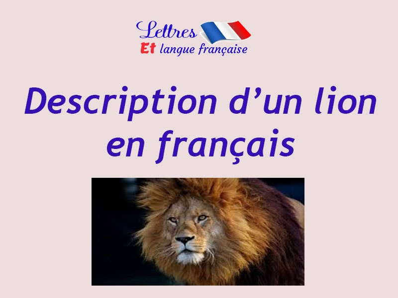Description d'un lion