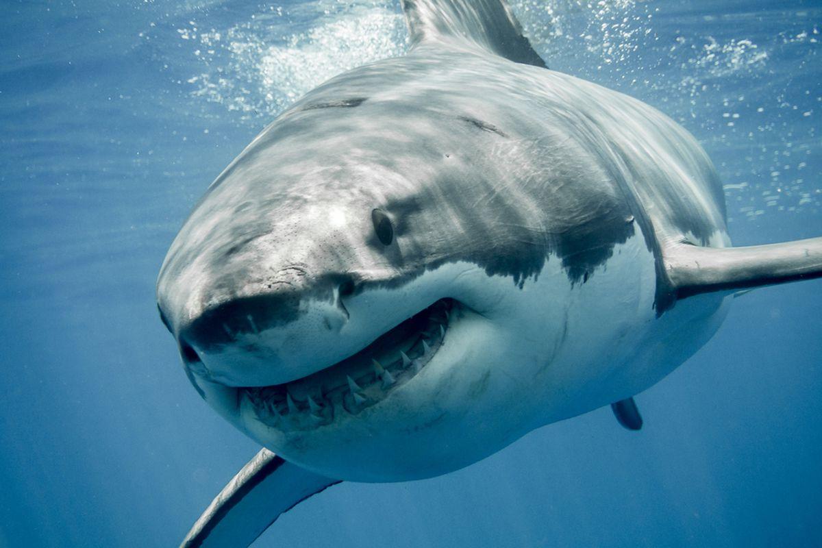 Diez criaturas submarinas que te pueden poner en problemas