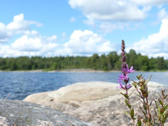 Camping Urlaub mit Hund Roadtrip Schweden Säffle Vänern Vänernsee Klippen