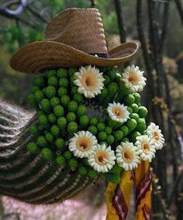 кактус-ковбой