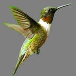 bird in spanish