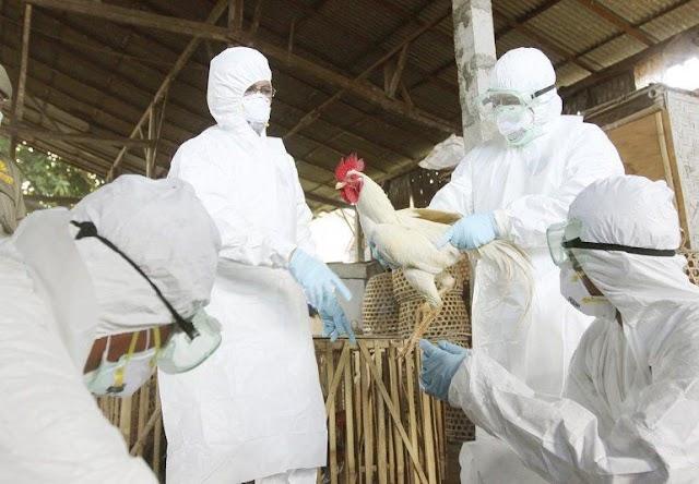 Reportan  en Rusia primeros casos de gripe aviar H5N8 en humanos