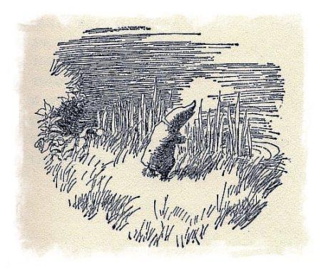 moley shepard