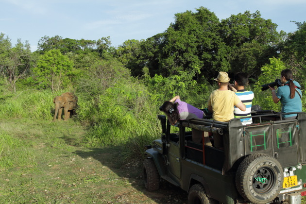 A Minneriya National Park special safari moment when you get close to the wild elephant
