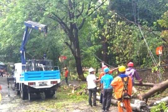 Hujan dan Angin Kencang Akibatkan Pohon Tumbang di Kawasan Senggigi