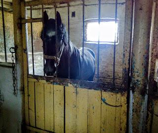 Дибровка. Территория конного завода