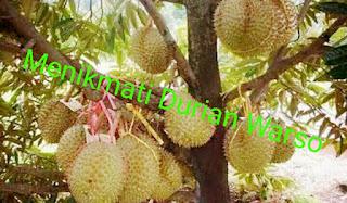 Harga Durian di Warso Farm