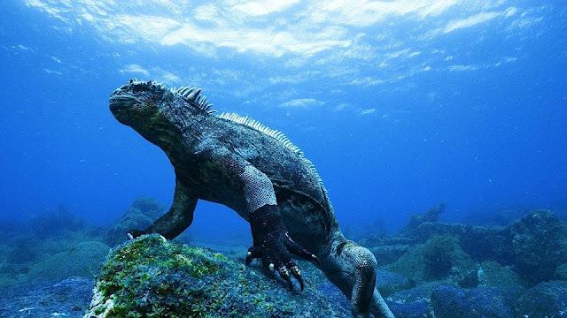 Đảo thiên đường Galapagos