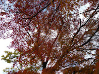 王仁公園・秋の紅葉