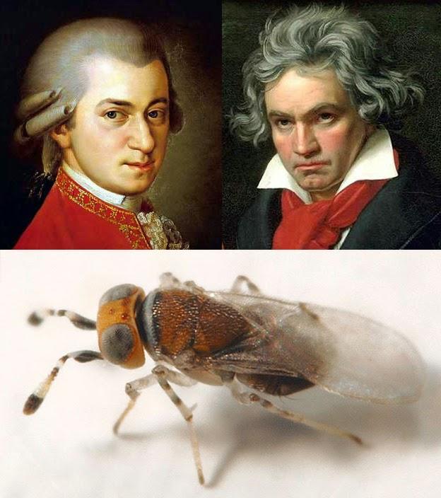 Mozartella beethoveni
