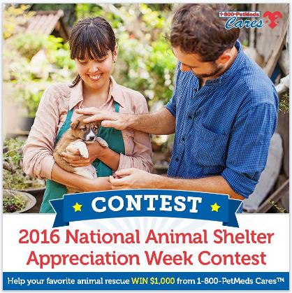 2016 National Animal Shelter Appreciation Week Contest