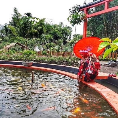 Kolam Ikan Koi Tirta Kebon nDelik Magelang