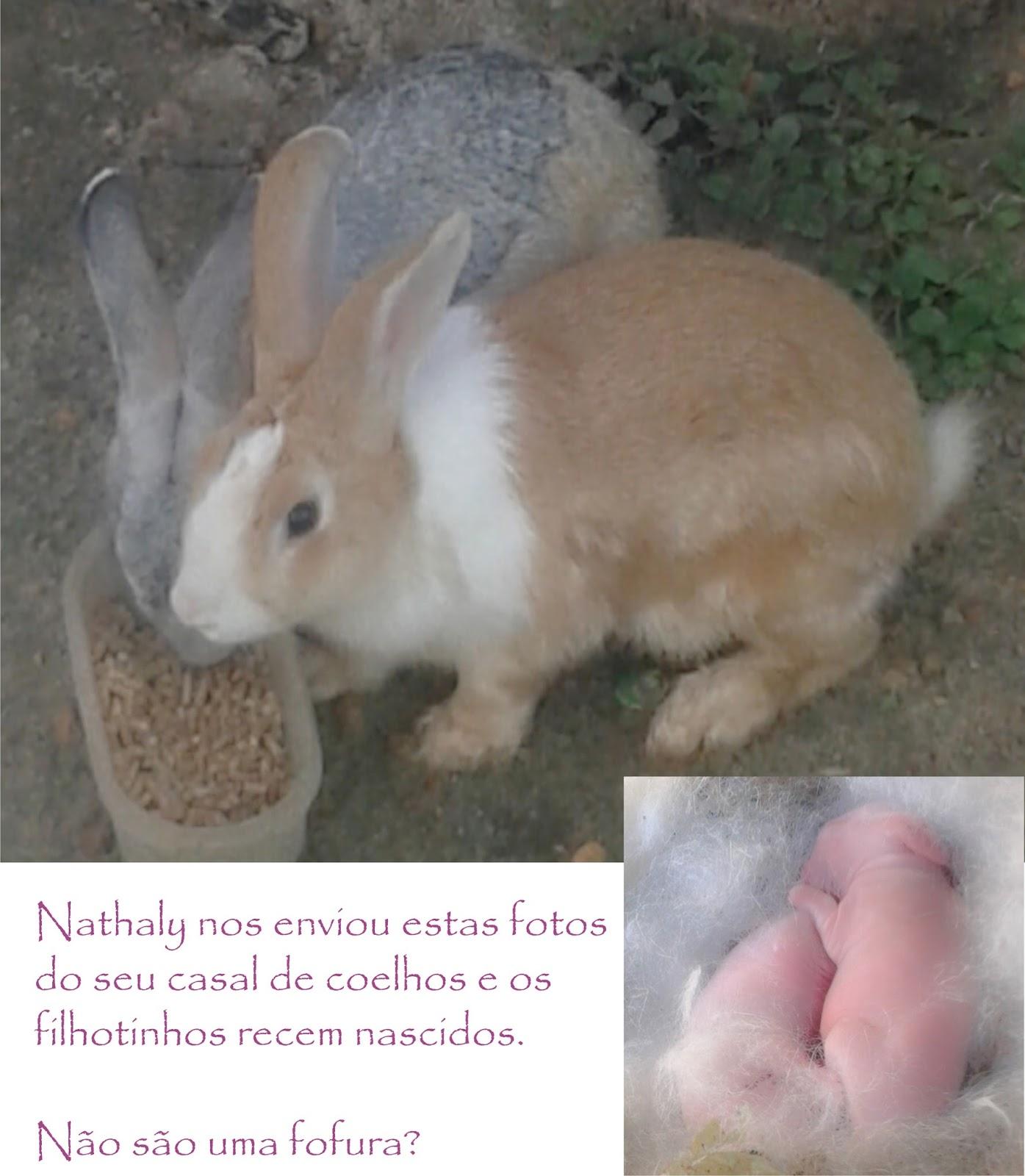 Coelhos, Coelhas E Coelhinhos