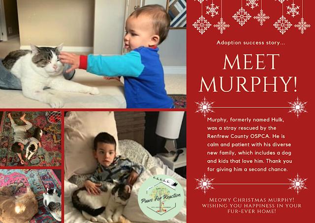 iAdopt for the Holidays OSPCA Renfrew County pet adoption