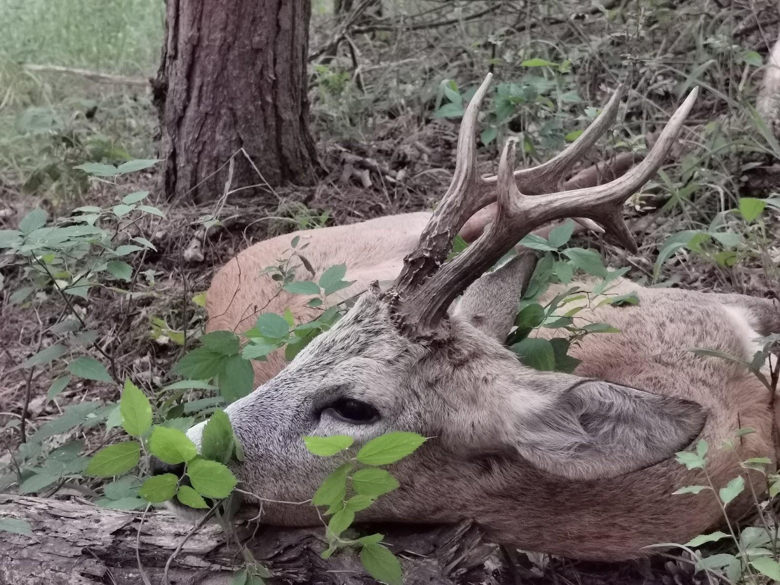Disznó vadászat randi