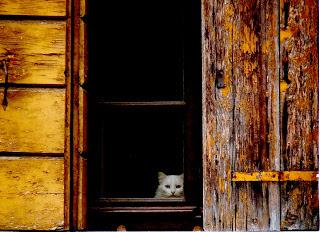 gatto bianco finestra