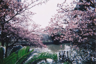 Parque de Minamiboso