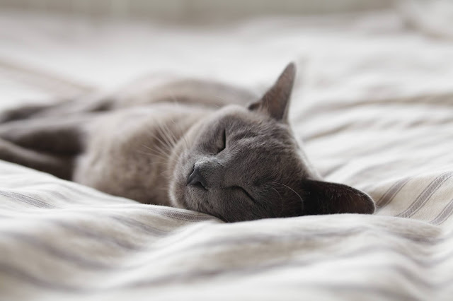 sleeping cat: Photo by Alexander Possingham on Unsplash