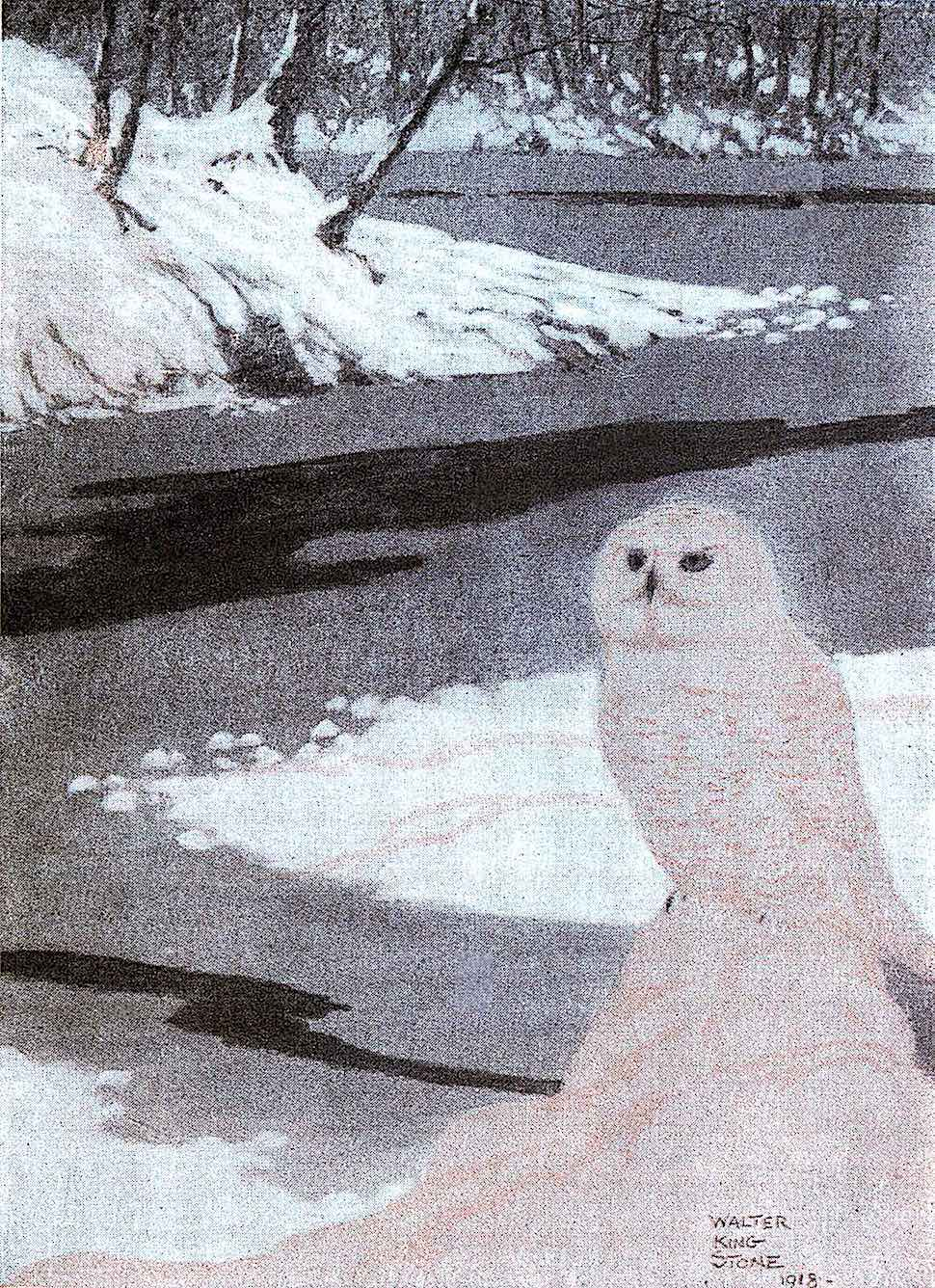 a 1918 Walter King Stone illustration of a white owl in winter