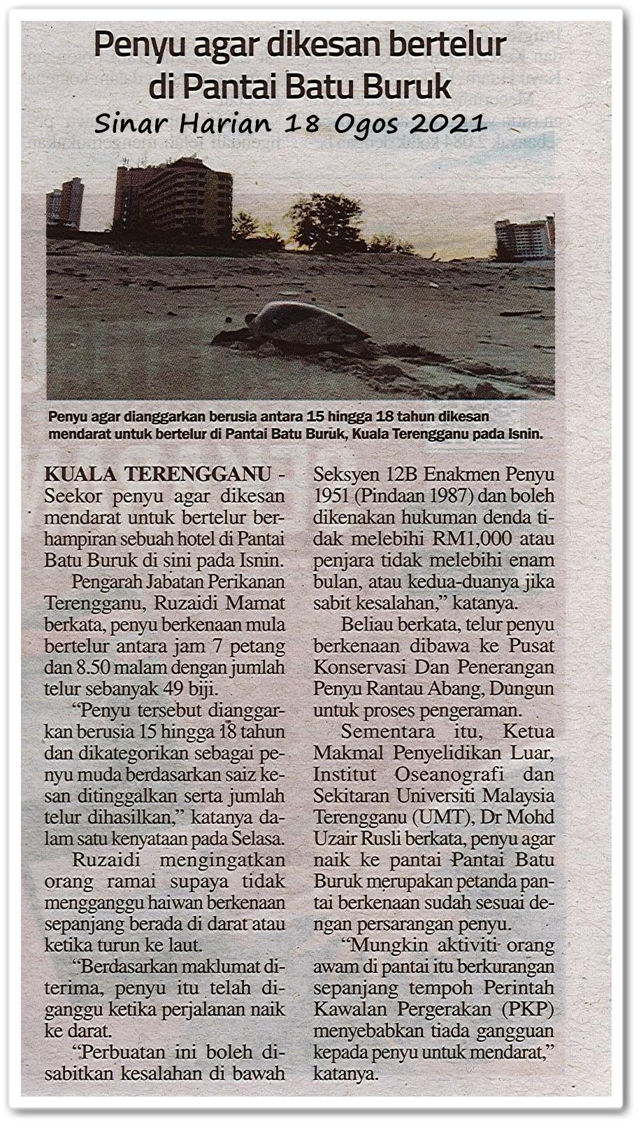 Penyu agar dikesan bertelur di Pantai Batu Buruk - Keratan akhbar Sinar Harian 18 Ogos 2021
