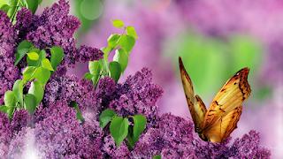 luigi pirandello primavera poesia- wallpapercave-la santa furiosa