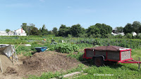Rich black soil, what every gardener would want - The Farm at Stratford, CT