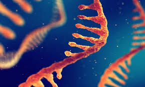 حمض RNA