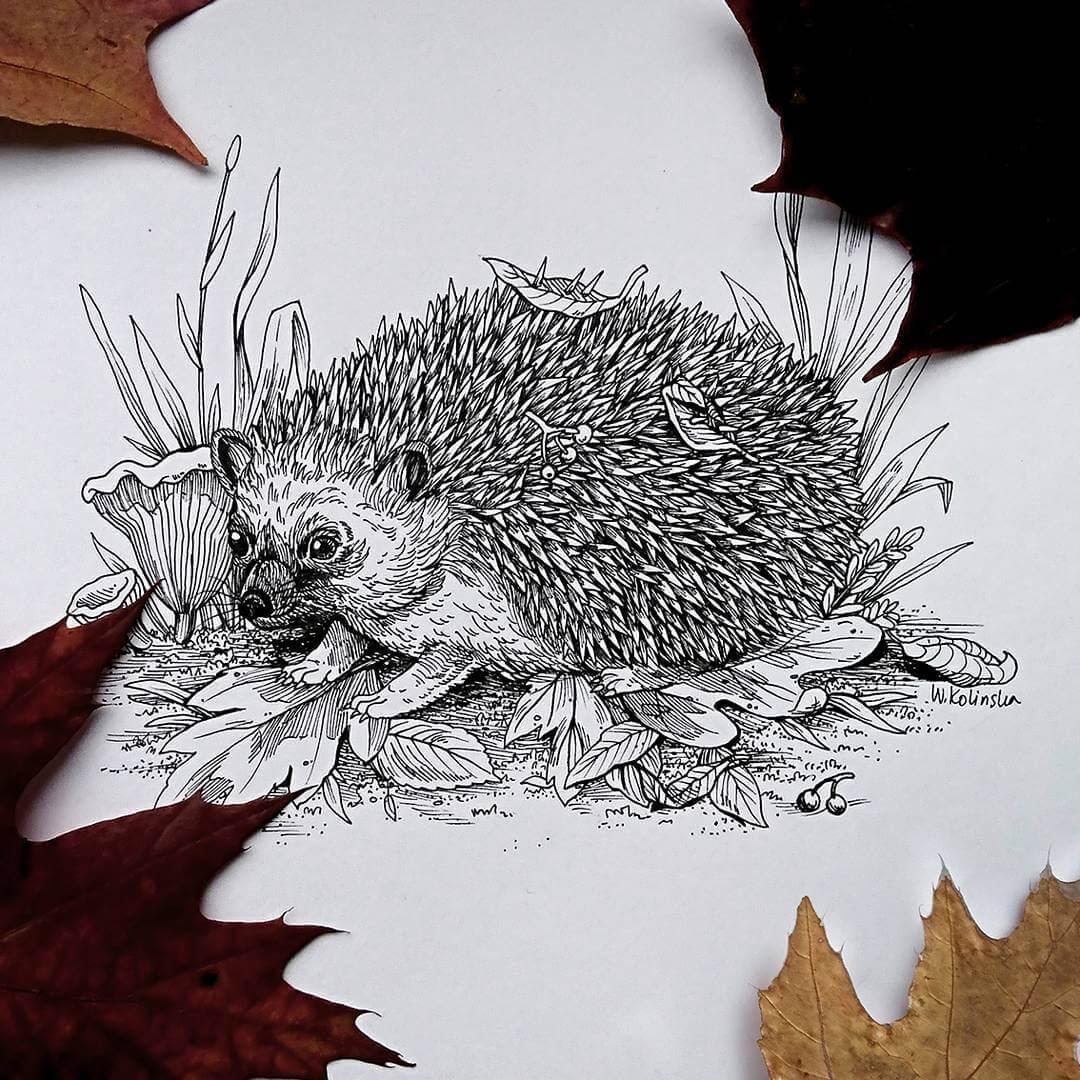 05-Hedgehog-Weronika-Kolinska-Black-and-White-Animal-Ink-Drawings-www-designstack-co