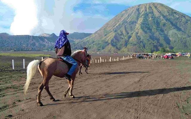 Gunung bromo, kuda bromo