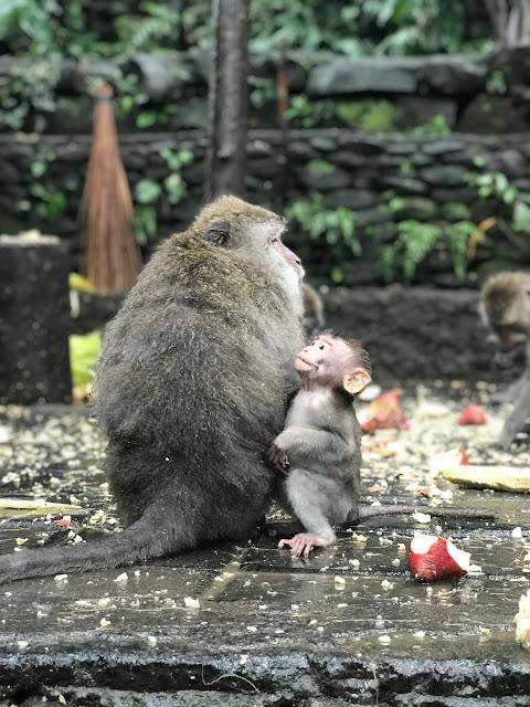 tempio sacro scimmie ubud bali