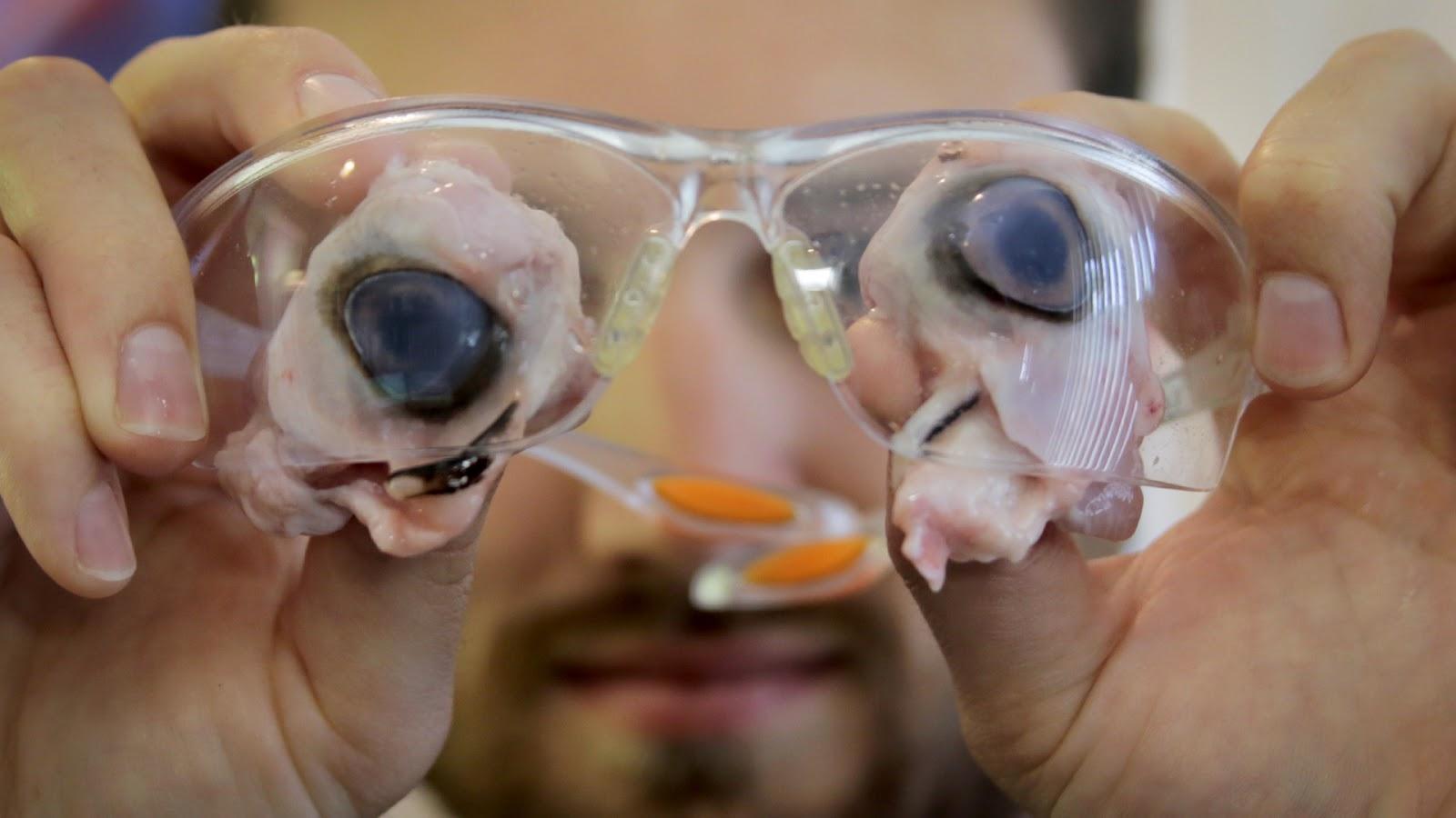 William Osman: Safety Glasses vs Laser Glasses
