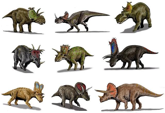 Infraorder Ceratopsia  Keluarga Ceratopsidae  Subfamili Centrosaurinae  Avaceratops - (Montana, USA)  Suku Centrosaurini  Monoclonius - (Montana, AS & Alberta, Kanada)  Brachyceratops - (Montana, USA & Alberta, Kanada)  Centrosaurus - (Alberta, Kanada)  Styracosaurus - (Alberta, Kanada & Montana, AS)  Suku Pachyrhinosaurini  Einiosaurus - (Montana, USA)  Achelousaurus - (Montana, USA)  Pachyrhinosaurus- (Alberta, Kanada & Alaska)  Subfamili Ceratopsinae  Ceratops - (Montana, USA & Alberta, Kanada)  Chasmosaurus - (Alberta, Kanada)  Agujaceratops - (Texas, USA)  Pentaceratops - (New Mexico, AS)  Anchiceratops - (Alberta, Kanada)  Arrhinoceratops - (Alberta, Kanada)  Torosaurus - (Wyoming, Montana, Dakota Selatan, Dakota Utara, Utah & Saskatchewan)  Diceratops - (Wyoming, USA)  Triceratops - Montana, Wyoming, AS & Saskatchewan, Alberta, Kanada.