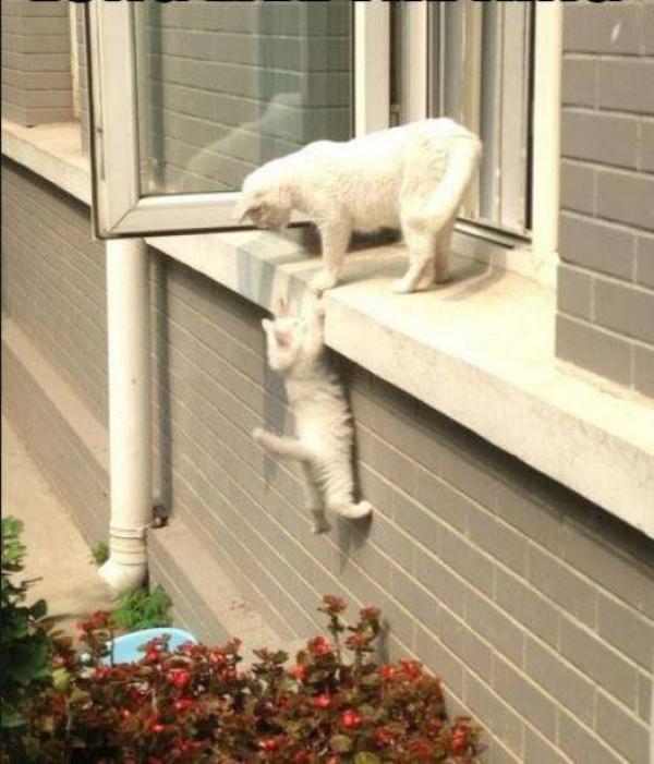 gato salvando outro gato