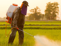 Jangan Sampai Salah, Ini dia Cara Tepat Menggunakan Pestisida