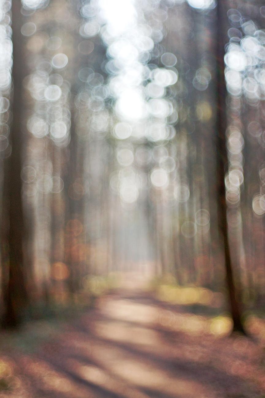48€ Kombo — Wald und Sonne