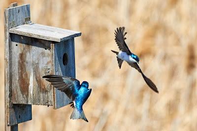 Stop Piara Burung Hasil Tangkapan Liar!