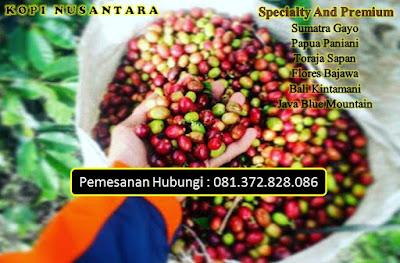 Jual Grosir Kopi Robusta Di Surabaya